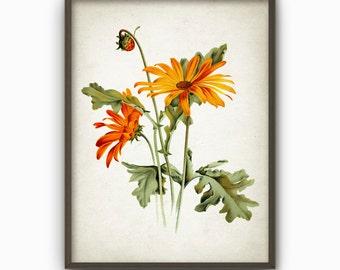 Antique Botanical Art Print - Vintage Botanical Home Decor - Antique Book Plate Illustration - Giclee Flower Picture (B117)