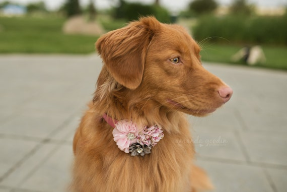 Dog collar flowers, Dog collar, dog collar bling, collar Flowers, Wedding Dog Flowers, Bows for Dogs, Dog Bows, Pet flower, pink dog flower