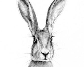 rabbit art -  rabbit illustration - art print - hare art  - animal art - illustration - animal drawing  - 7 x 5 inch