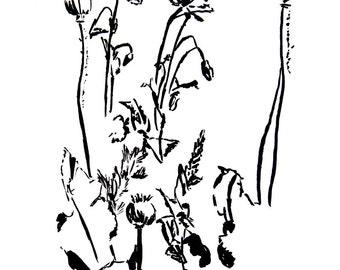 Poppies by Angela Diplock (Fine Art Print)