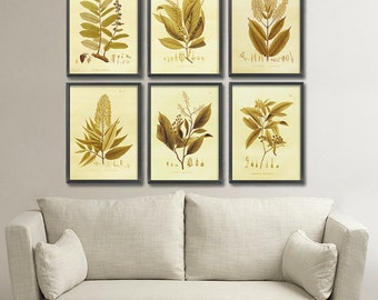 6 Set Vintage Botanical art prints in gold tones. All 6 plant prints for the price of 4! Beautiful home or office wall decor. In 2 sizes