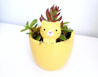 Yellow Cat Pot Live Succulent Plant - Succulent Included