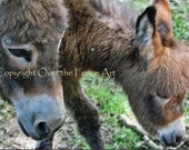 Donkey Card Pet Photography Mother Donkey  Grazing with Baby