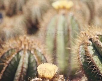 Cactus Photography, Southwest Photograph, Desert Print, Jungalow, Bohemian Decor, Travel Photography, Poster Size Print, Boho Style,