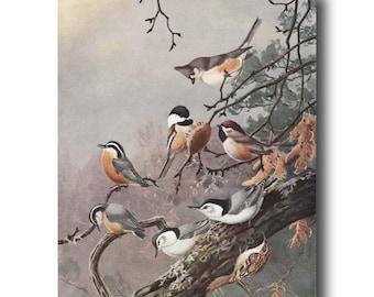 "Chickadees Painting Print, Vintage Bird Art (Bird Illustration, Antique Bird Wall Decor Gift) --- ""Chickadee & Nuthatch"" No. 90"