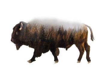 Forest Bison