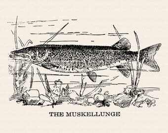 Muskie clipart | Etsy
