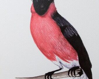 Horned Bird_Print