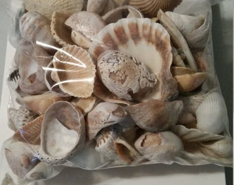 Assorted Sea Shells and Shell Pieces-  Most hand-picked- some store purchased-1 lb. bags