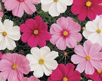 500 Seeds Cosmos Sensation Mix FLOWER SEEDS