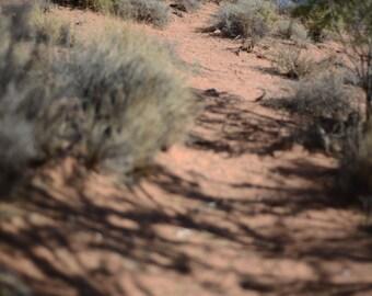Las Vegas Desert, Path, Walkway, Nevada