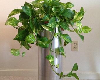 "24"" hand polished plant stand"