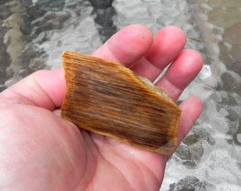 Small Petrified Wood Slab Stone Collectible or Lapidary Stone