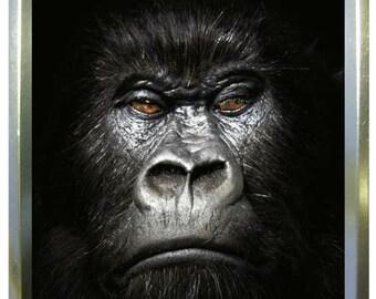 Gorilla face design 2oz gold tobacco tin,pill box,storage tin
