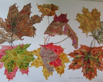 Autumn Maple Leaves II