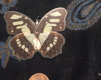 Real Butterfly Pendant
