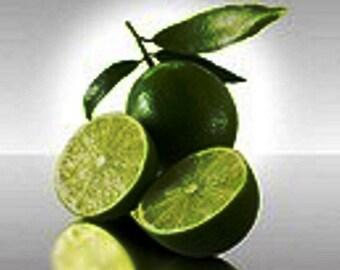 Persian Lime Tree (Grafted) /Bonsai Tree/Fruit Tree/Citrus Tree/Flowering Tree/Live Tree/Live Bonsai