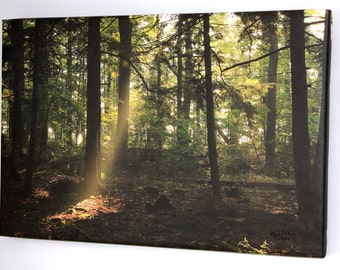 "Rays Through the Woods (16"" x 24"" Gallery Wrapped Photography)"