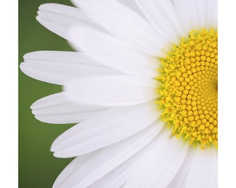 Nature Photography PRINT, Half Daisy, Wall Art