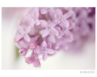 Nature Photography PRINT, Lilacs - 3, Wall Art