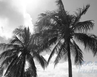 Palm Days Fine Photography Print