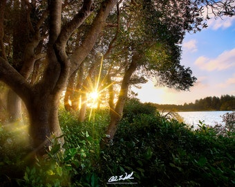 Light Breathes Life, sunset, forest, wall art, landscape, photography, photo, nature, photo, print,