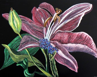 Pink Lily scratchboard original drawing