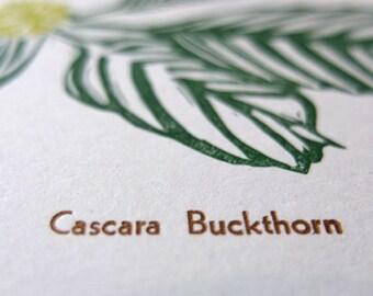 linocut letterpress blank card Cascara buckthorn