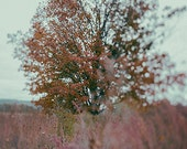 Landscape - Fall Dream - Fine Art Photography - Home Decor
