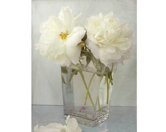 White Peony Still Life Photography,  8 x 10 Print, Floral Art Print, Peony Art