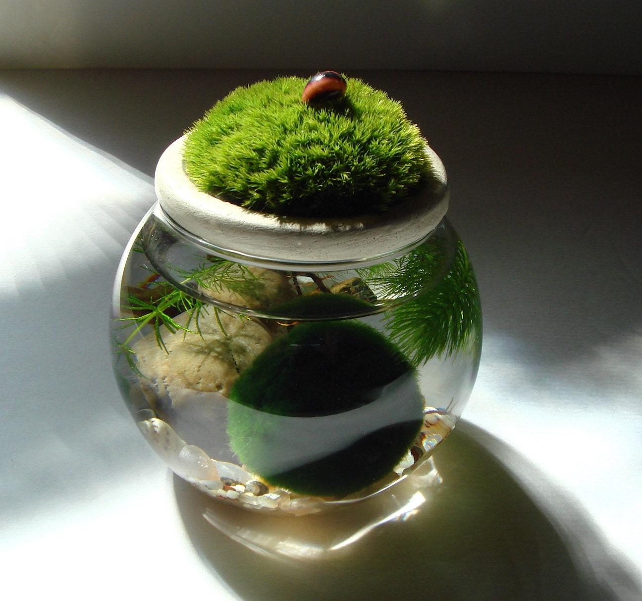 Zen. Garden. MOSS. Stone Top. Marimo Ball. Unique. Terrarium