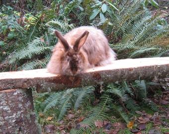 Satin Angora Rabbit Fiber, Copper Satin Angora .5 oz., Short Blending Length Angora Rabbit Fiber, Natural Luster Variegated, blend spin Felt