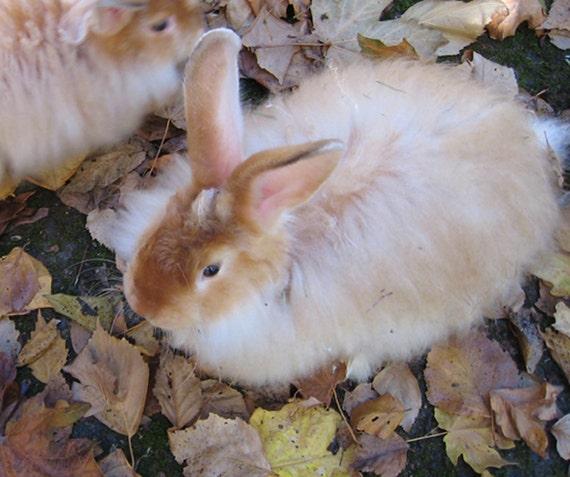 Red Satin Angora Rabbit Fiber 1/2 oz combed