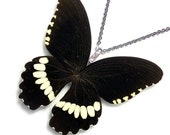 Real Butterfly Wing Necklace / Pendant (WHOLE Papilio Polytes (m) Butterfly - W129)