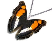 Real Butterfly Wing Necklace / Pendant (WHOLE Doxocopa Laura Butterfly - W067)
