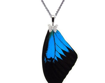 Real Butterfly Wing Pendant / Necklace (Papilio Ulysses Forewing - N020)