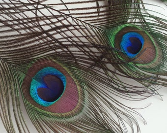 VOGUE  PEACOCK FEATHERS  /  Large Eyes, Natural with Red Highlights, 4 plumes  /  535