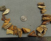 Fossilized Bone Fragments Beads
