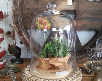 Medium Glass Cloche, Bell Jar, Glass Dome, Apothecary, Terrarium, Ornament Christmas Display cake stand