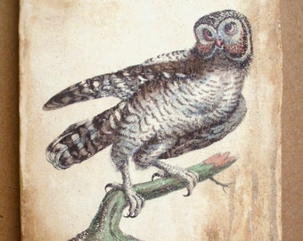 American Wood Owl 5x7 art tile