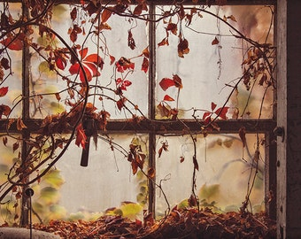 Dark Window Photography, Urban Decay, Forgotten, Abandoned Building Photograph, Architecture Photo, Nature, Orange Autumn Leaves, Urbex