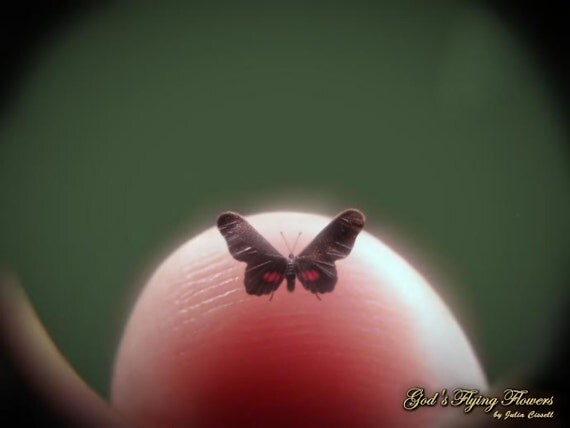 """Ruby Spotted Swallowtail, Miniature Butterfly, Papilio Anchisiades, Dollhouse Scale, 1:12, 3/16"""" Wingspan, 4.5 mm, Micro, GFF"""