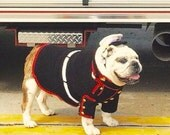 Marine Dog Uniform - Marine Corps Dog - Bulldog dog sweater - devil dog sweater - English bulldog clothing - pet sweater License 21512