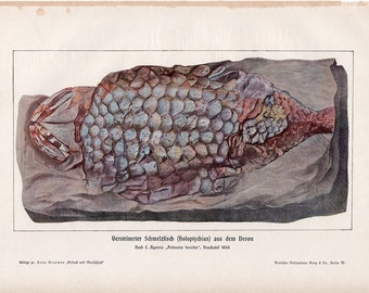 1900 FISH FOSSIL print original antique ancient sea life lithograph