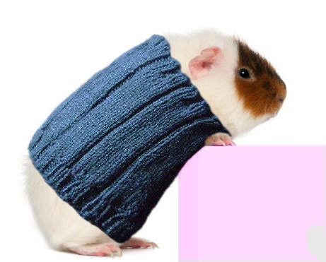 Guinea Pig Sweater Cozy Unique Extra Stretchy