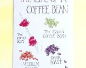 Three Life of a Coffee Bean Postcards, fun coffee fact on back, 4 in x 6 in, silky smooth, birthday coffee lover gift