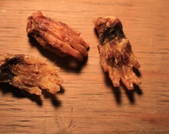 Creepy Feet - Skinned Furbearer Paws for Spooky Crafts