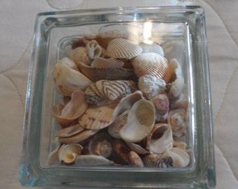 Sea Shell Glass Bookend