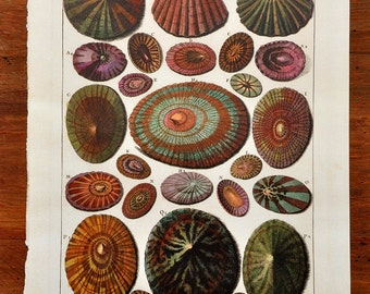 Shell Illustration Book Plate I Limpets Print Beach House Cottage Decor