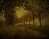 Melancholy winter tree avenue 8x12 art photograph print